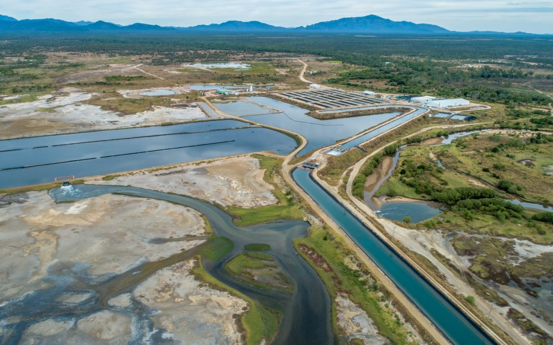 The sustainability behind farmed Australian barramundi