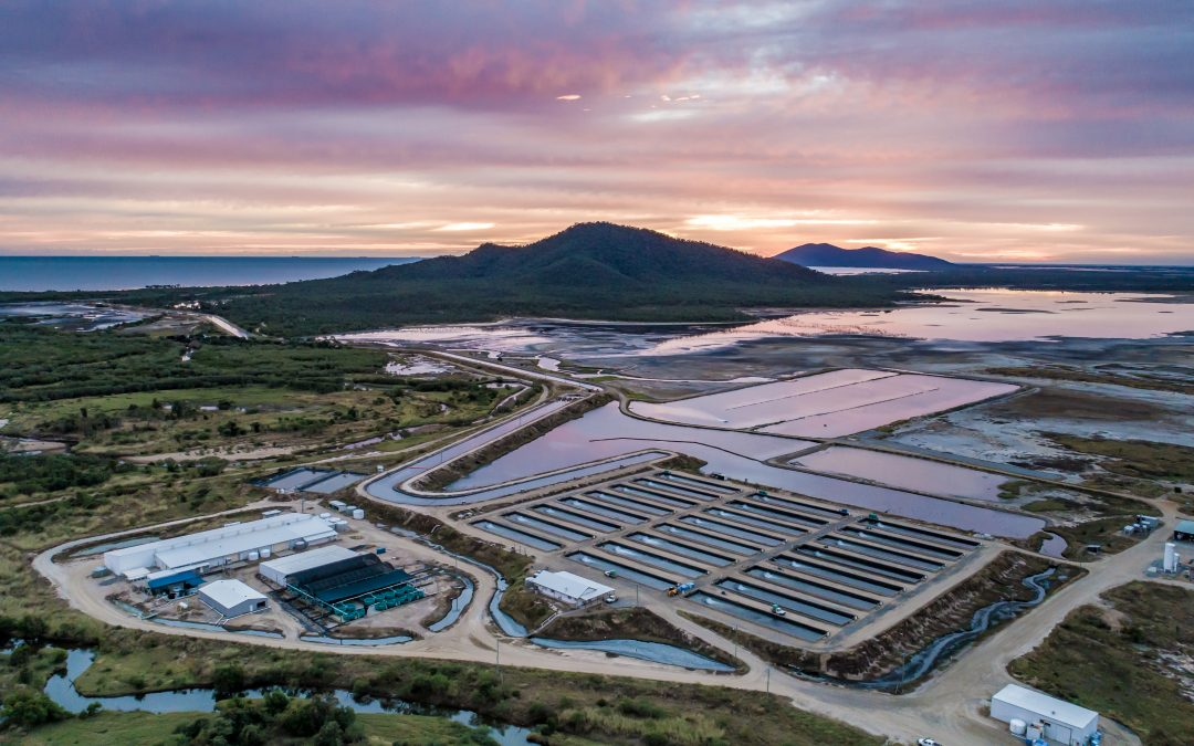 Interview with Australian barramundi farmer: Coral Coast Barramundi