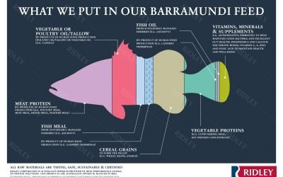 What do barramundi eat? An interview with Ridley